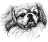 Tibetan Spaniel Personalised Greetings Card